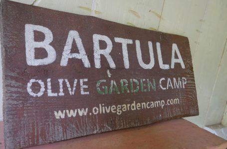 Bartula My Olive Garden camp