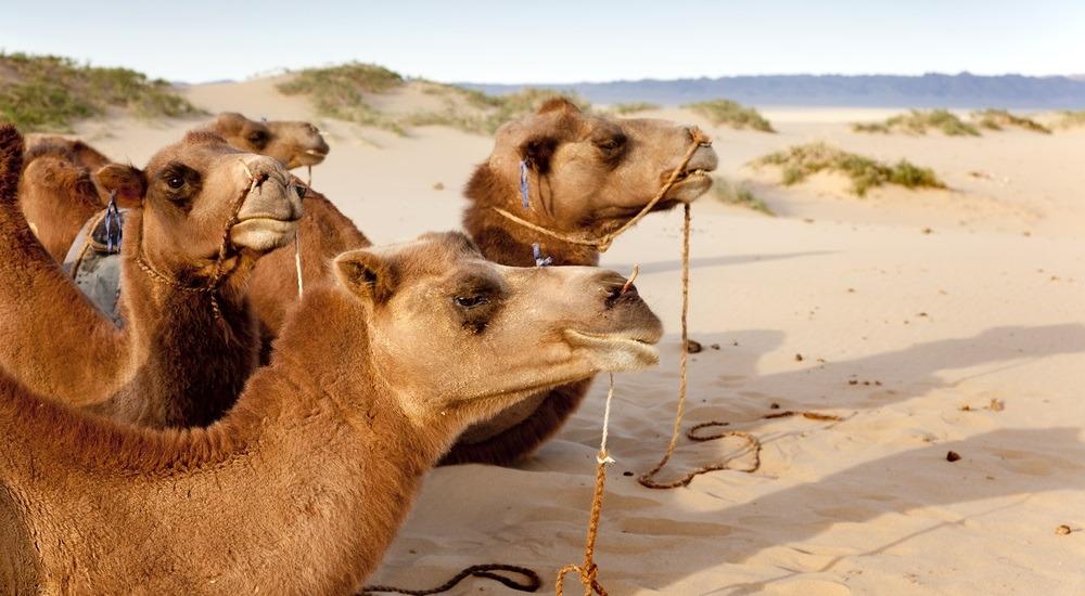 największa pustynia w azji
