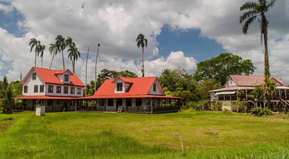 suriname - plantacja papryki