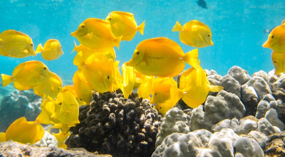 wyspa cooka - podwodny świat