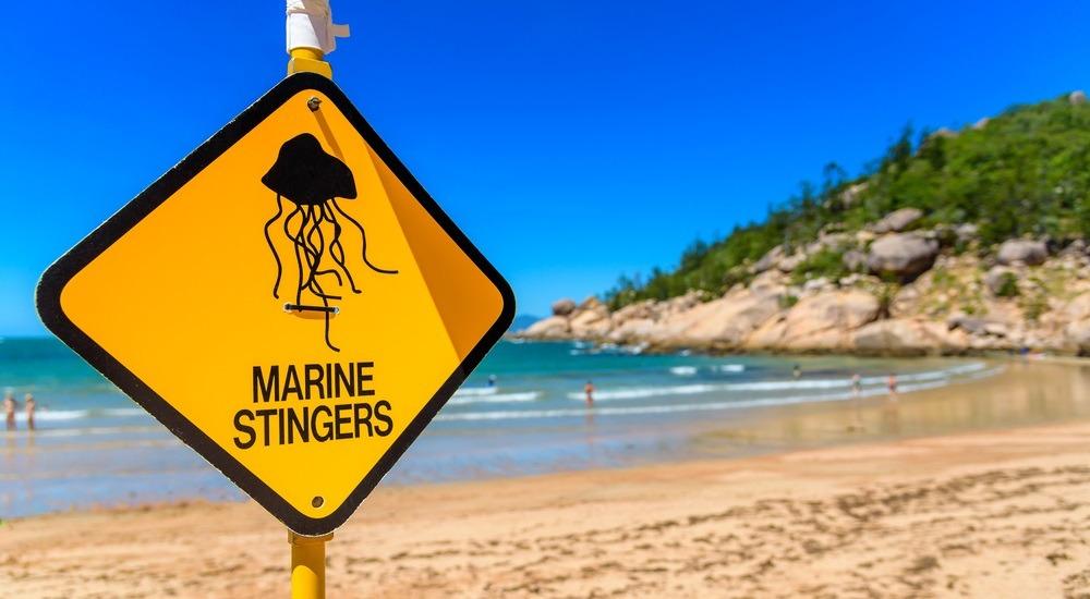 niebezpieczne meduzy