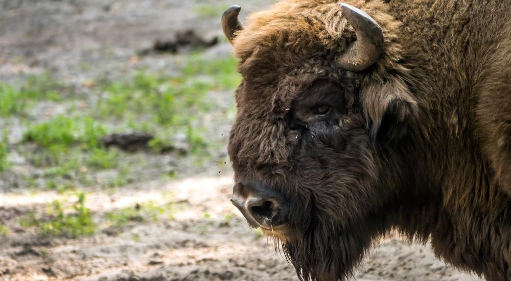 woliński park narodowy zwierzęta