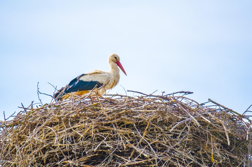 Największy rezerwat ornitologiczny