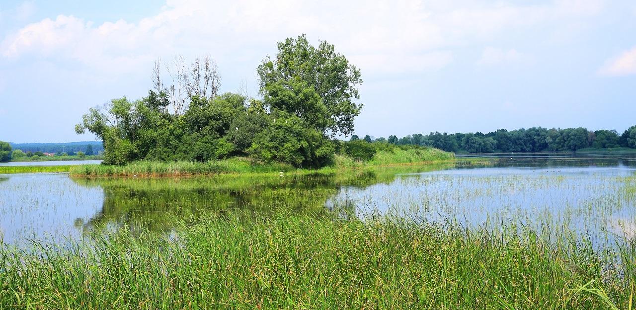 barycz rzeka