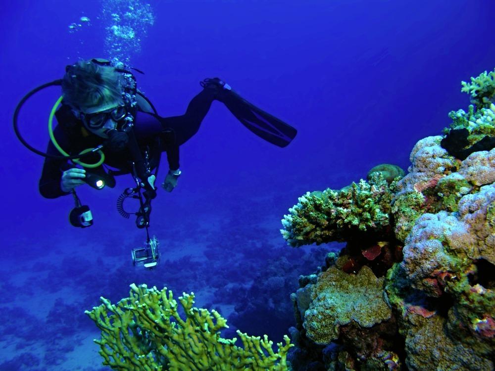 rafy koralowe taba