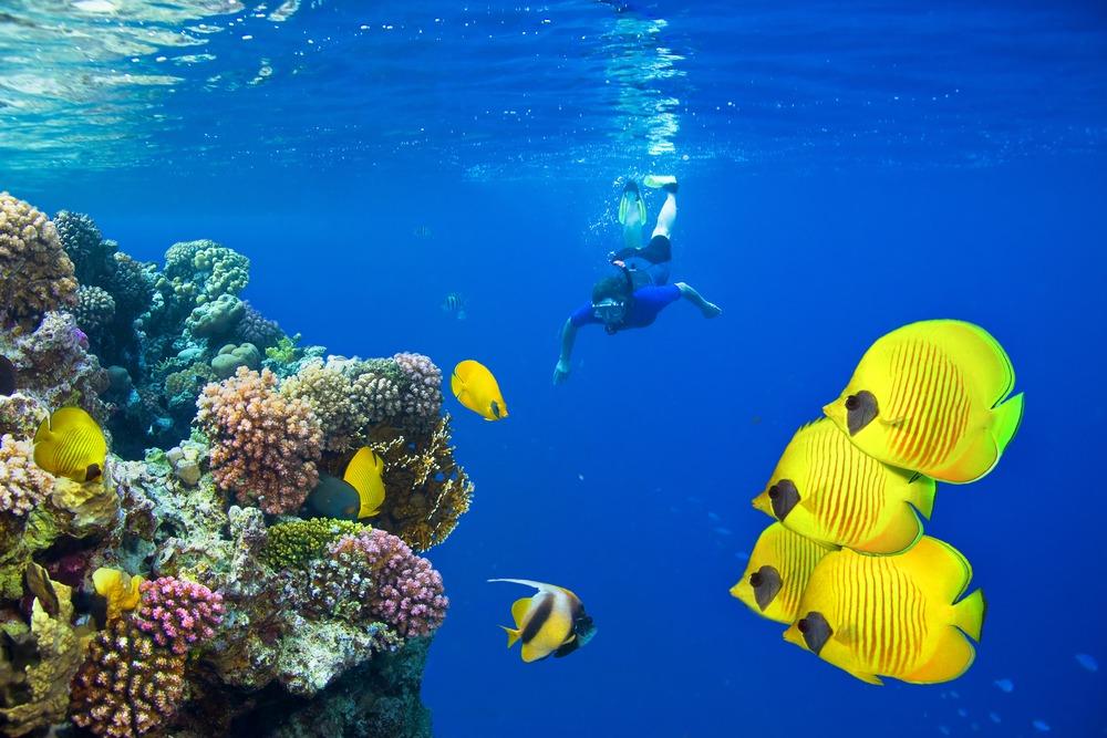 synaj rafa koralowa